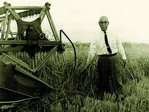 Keisaburo inspects the harvesting of mature rice, circa the late 1950's. Photo courtesy of Koda Farms