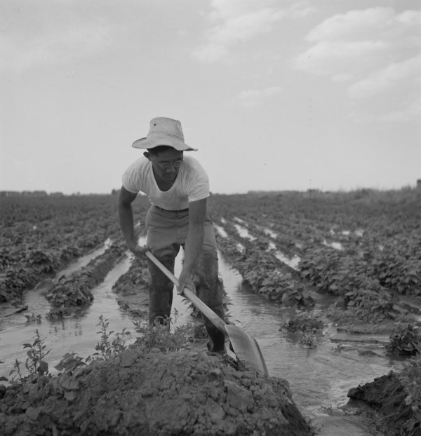 New Traveling Exhibit 'Uprooted' Will Tell the Story of JA Farm Labor Workers
