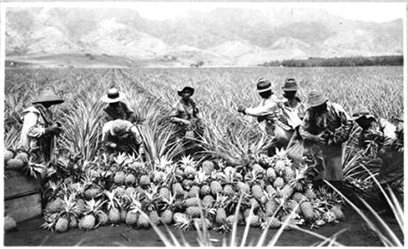Standing in Solidarity With Native Hawaiians: Japanese Hawaiians and Pacific Islanders